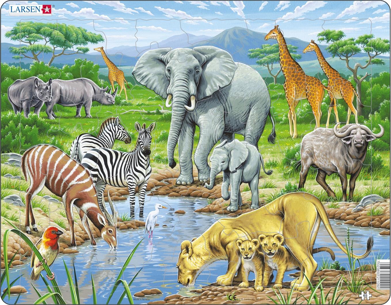Картинки животных жарких странах женским