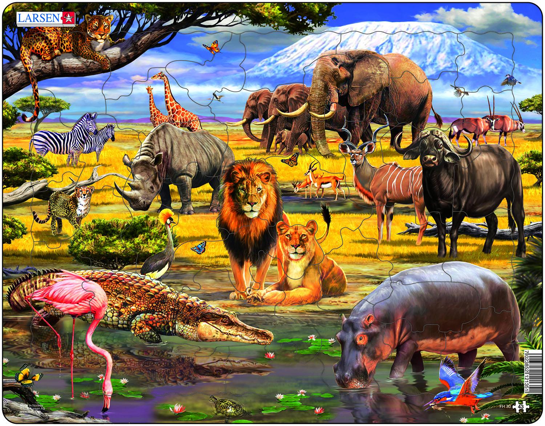 способов весь животный мир в картинках сожалению, можем