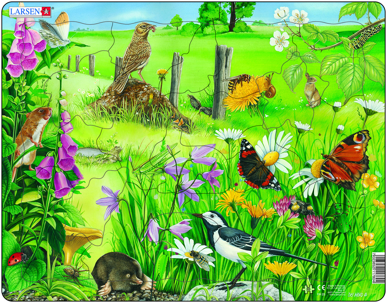 добилась картинки экосистем для доу консультанты помогут