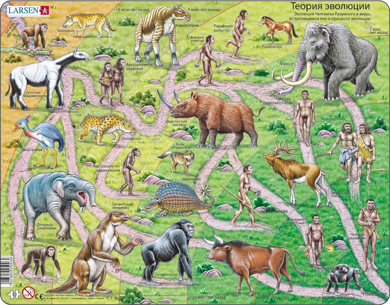 evolution of animals - HD